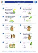 Science - Third Grade - Worksheet: How do plants grow?
