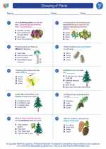 Science - Third Grade - Worksheet: Grouping of Plants