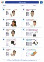 Science - First Grade - Worksheet: My senses