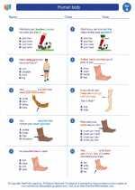 Science - First Grade - Worksheet: Human body