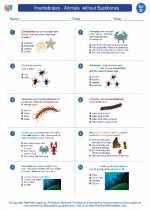 Science - Fourth Grade - Worksheet: Invertebrates - Animals  without Backbones