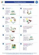 Science - Fourth Grade - Worksheet: Food webs/food chains