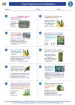 Science - Fifth Grade - Worksheet: Plant Responses and Adaptations
