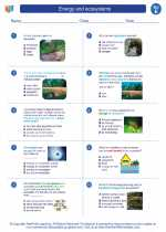 Science - Fifth Grade - Worksheet: Energy and ecosystems
