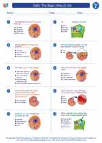 Science - Sixth Grade - Worksheet: Cells: The Basic Units of Life