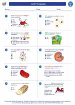 Science - Seventh Grade - Worksheet: Cell Processes