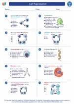 Science - Seventh Grade - Worksheet: Cell Reproduction