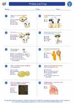 Science - Seventh Grade - Worksheet: Protists and Fungi