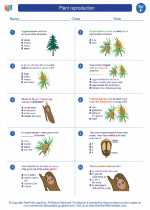 Science - Sixth Grade - Worksheet: Plant reproduction
