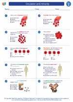 Science - Eighth Grade - Worksheet: Circulation and immunity