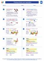 Biology - High School - Worksheet: Photosynthesis and respiration