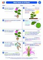 Science - Third Grade - Worksheet: Main Parts of Plants