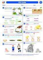 Science - First Grade - Worksheet: Life cycles
