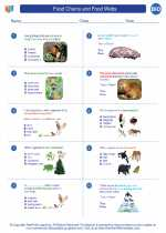 Biology - High School - Worksheet: Food Chains and Food Webs