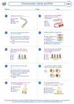 Biology - High School - Worksheet: Chromosomes, Genes and DNA