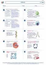 Biology - High School - Worksheet: Mitosis
