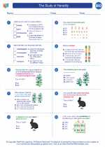 Biology - High School - Worksheet: The Study of Heredity