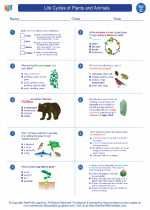 Science - Third Grade - Worksheet: Life Cycles of Plants and Animals