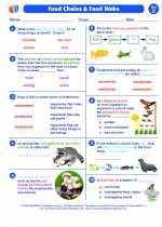 Science - Fourth Grade - Worksheet: Food Chains & Food Webs