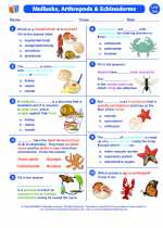 Science - Sixth Grade - Worksheet: Mollusks, Arthropods and Echinoderms