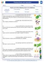 Biology - High School - Vocabulary: Photosynthesis and respiration