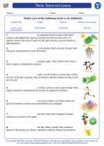 Science - Fifth Grade - Vocabulary: Roots, Stems and Leaves