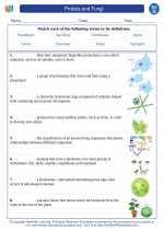 Science - Seventh Grade - Vocabulary: Protists and Fungi