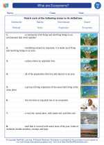 Science - Third Grade - Vocabulary: What are Ecosystems?