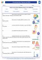Biology - High School - Vocabulary: Chromosomes, Genes and DNA