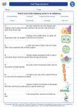 Science - Seventh Grade - Vocabulary: Cell Reproduction