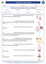 Science - Eighth Grade - Vocabulary: Respiration and excretion