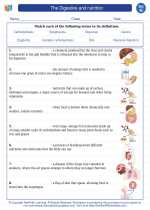 The Digestive and nutrition