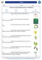Science - Second Grade - Vocabulary: Plants
