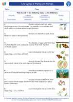 Science - Third Grade - Vocabulary: Life Cycles of Plants and Animals