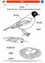 Science - Kindergarten - Worksheet: Birds