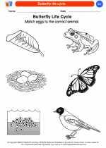 Science - Kindergarten - Worksheet: Butterfly life cycle
