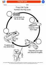 Science - Kindergarten - Worksheet: Frog life cycle