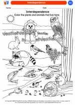 Science - Kindergarten - Worksheet: Interdependence