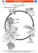 Science - Kindergarten - Worksheet: How plants grow