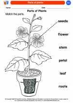Science - Kindergarten - Worksheet: Parts of plants