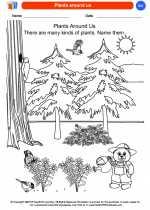 Science - Kindergarten - Worksheet: Plants around us