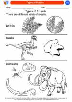 Science - Kindergarten - Worksheet: Types of Fossils