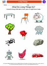 Social Studies - First Grade - Worksheet: Living Things