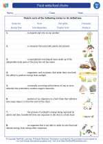 Science - Fourth Grade - Vocabulary: Food webs/food chains