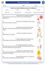 Science - Eighth Grade - Vocabulary: The nervous system