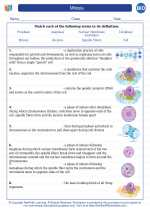 Biology - High School - Vocabulary: Mitosis