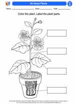 Science - Second Grade - Activity Lesson: All About Plants