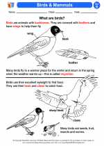 Science - Second Grade - Activity Lesson: Birds & Mammals