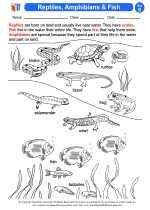 Science - Second Grade - Activity Lesson: Reptiles, Amphibians & Fish