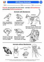 Science - Second Grade - Activity Lesson: All About Animals